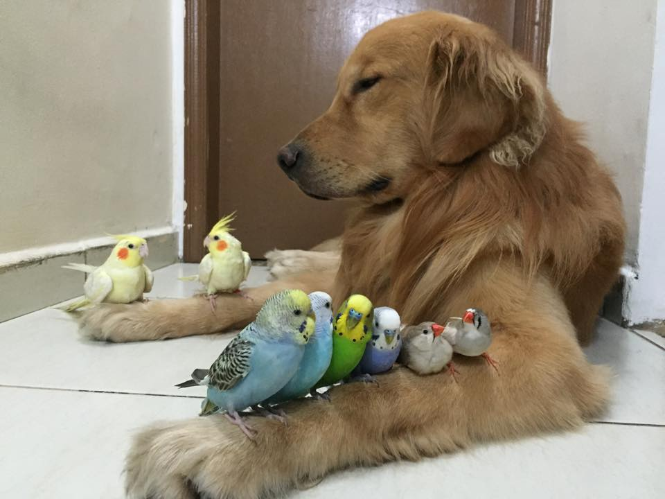 dog birds and hamster