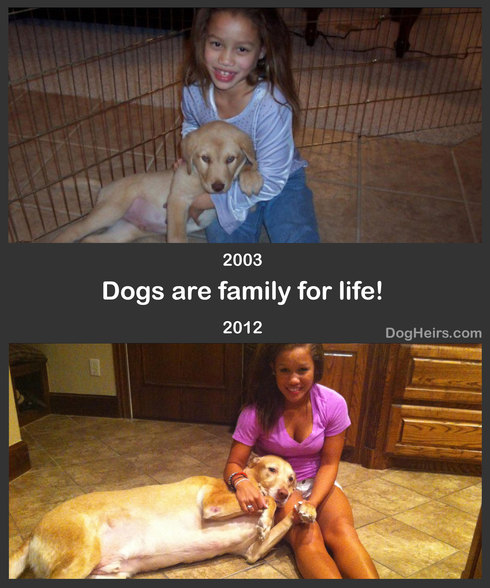 families dogs