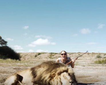 lion takes revenge
