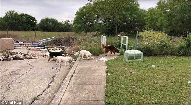 Texas dog dumping video